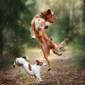pøbel hund